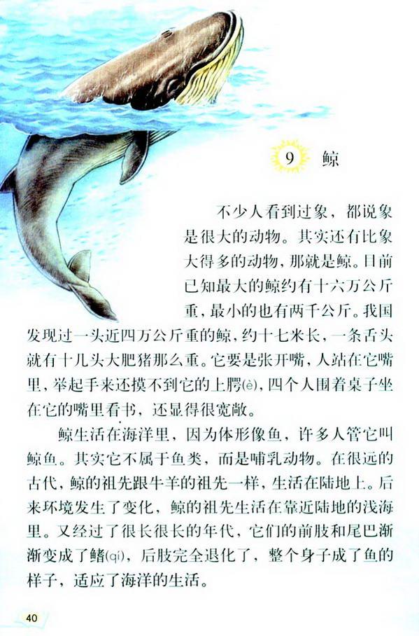 9 鲸(第45页)